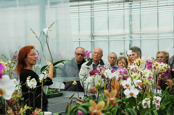 Orchideen Koch