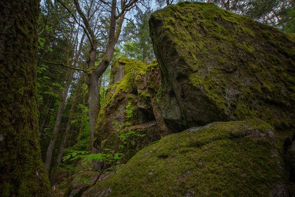Die Goldsteig-Etappe 5 führt durch das mystisch wirkende Lerautal