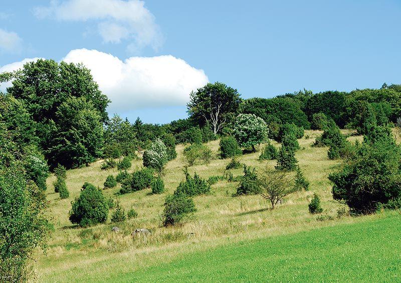 Naturschutzgebiet Greuthau