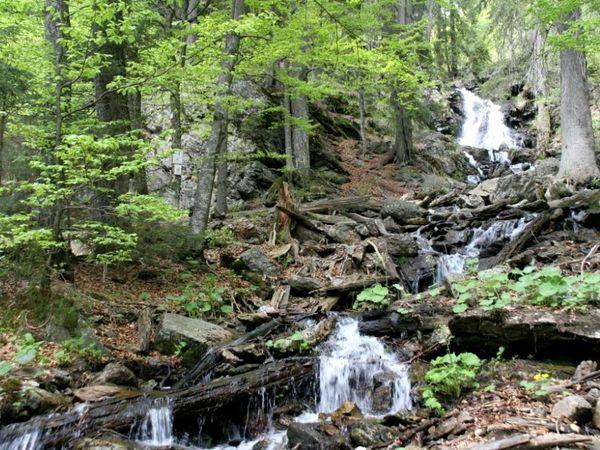 Wasserfall im Urwaldgebiet Höllbachgspreng am Fuße des Großen Falkenstein