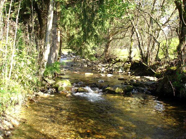 Der Kolbersbach fließt durch die Gemeinde Lindberg im Bayerischen Wald