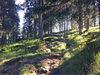 Urwaldgebiet am Großen Falkenstein
