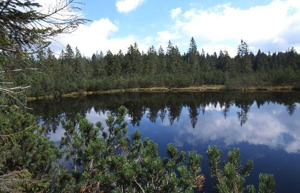 Der Latschensee in der Gemeinde Lindberg im Nationalpark Bayerischer Wald