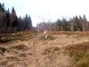 Der größte Teil des Lindbergschachten wird von der Heidelbeere eingenommen