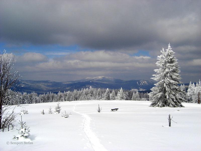 Wintertraum auf dem Ruckowitzschachten in der Gemeinde Lindberg im Nationalpark Bayerischer Wald