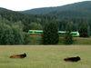 Die Waldbahn fährt am Urrinder-Gehege beim Nationalparkzentrum Falkenstein vorbei