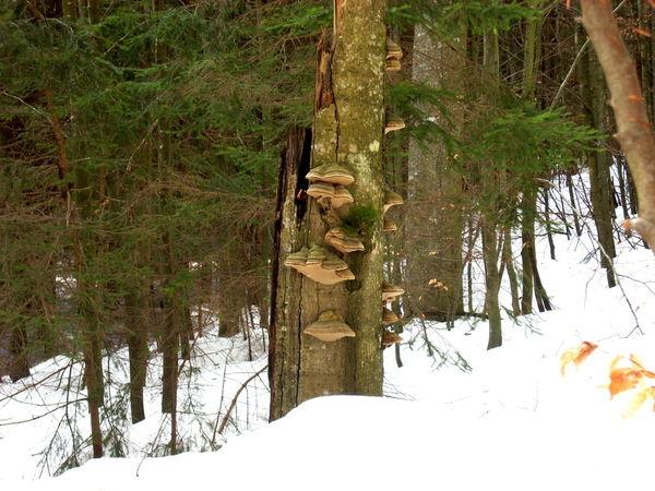 Winter im wilden Wald bei Scheuereck in der Gemeinde Lindberg