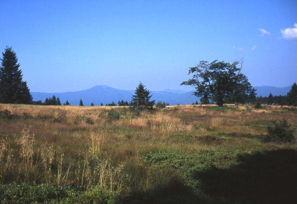 Blick vom Ruckowitzschachten im Nationalpark Bayerischer Wald zum Arber