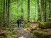 Wandern im Urwaldgebiet Mittelsteighütte im Nationalpark