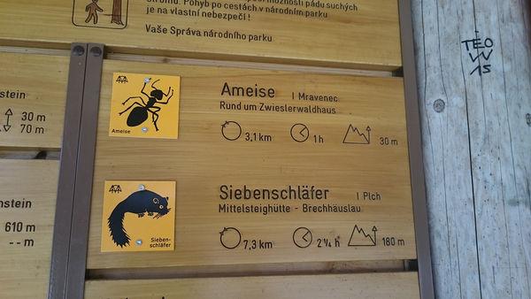 Rundweg Ameise im Nationalpark Bayerischer Wald