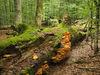 Urwaldgebiet Mittelsteighütte
