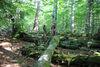 Urwaldgebiet Mittelsteighütte im Nationalpark Bayerischer Wald