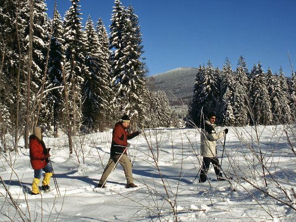 Schneeschuhtour ins Kolbersbachtal mit Blick zum Falkenstein