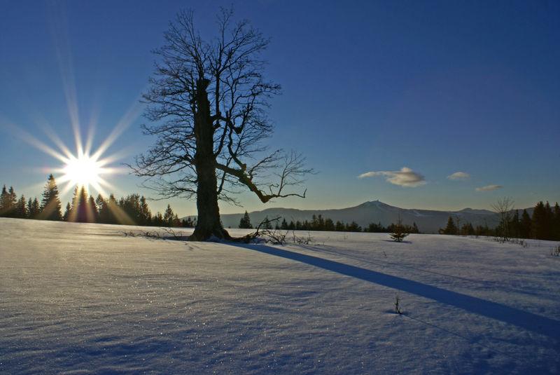 Kurz vor Sonnenuntergang im Winter auf dem Ruckowitzschachten bei Zwieslerwaldhaus