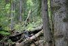 Totholz im Urwaldgebiet Höllbachgspreng