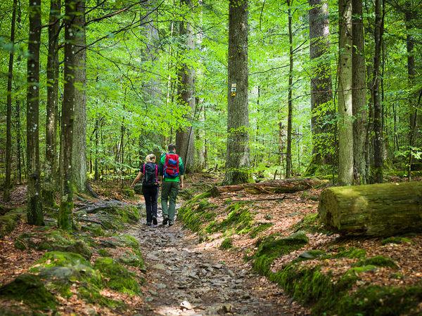 Wandern im Urwaldgebiet Mittelsteighütte