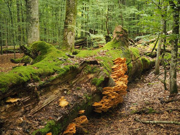 Im Urwaldgebiet Mittelsteighütte im Nationalpark Bayerischer Wald