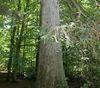 Mischwald im Urwaldgebiet Mittelsteighütte