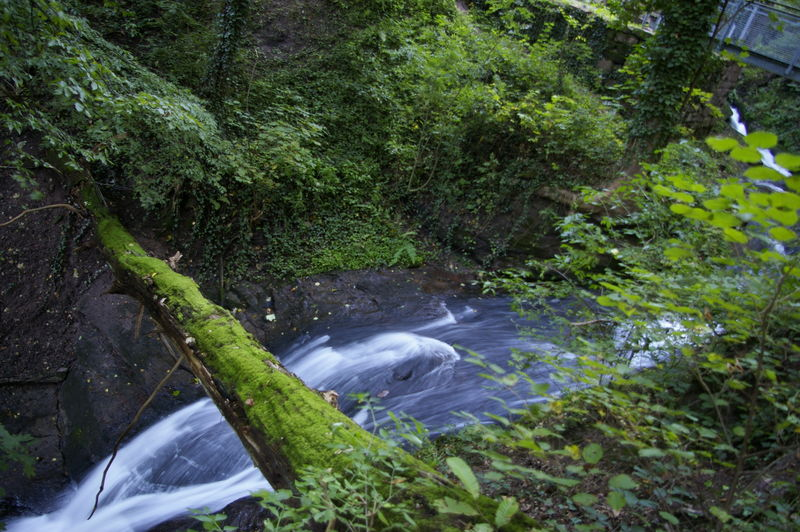 Laufbachwasserfälle bei Loffenau