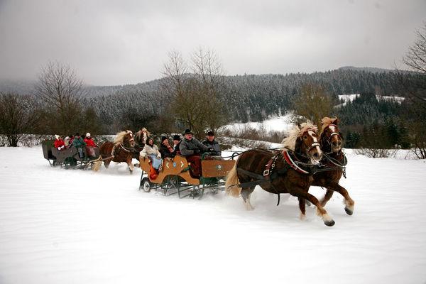 Pferdeschlittenfahrt mit Fuhrmann Hannes