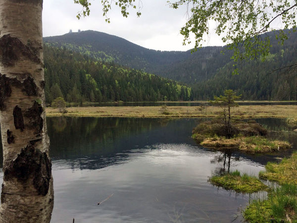 Blick über den Kleinen Arbersee zum Großen Arber