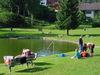 Badespaß im Naturbad Huberweiher in Lohberg am Fuße des Großen Arber