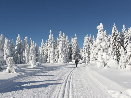 Traumhafte Winterlandschaft beim Skiwandern im Langlaufzentrum Lohberg-Scheiben