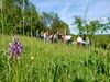 Führung beim Haus Lochfeld mit Orchidee auf der Wiese