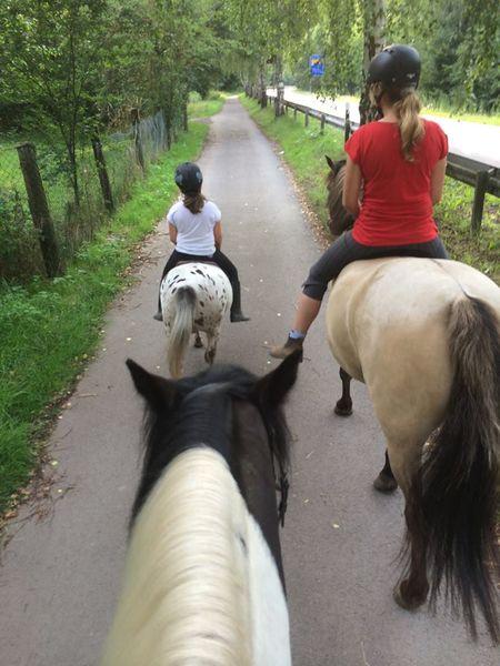 Ausritte für Groß und Klein auf dem Nussweilerhof in Ommersheim