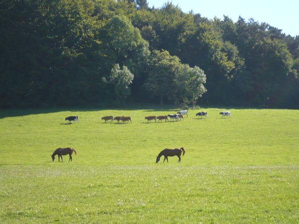 Pferde auf der Reitanlage Blütenhof