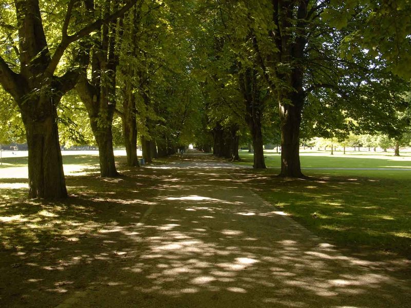 Alley in the Herzogenriedpark