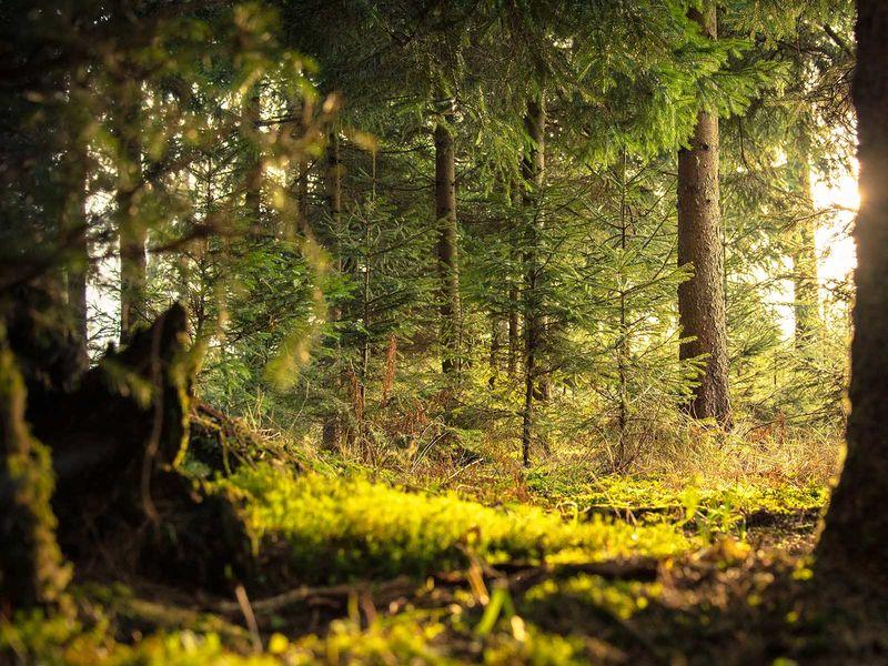 Mannheim, Rheinauer Wald