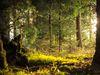 Mannheim, Rheinau forest