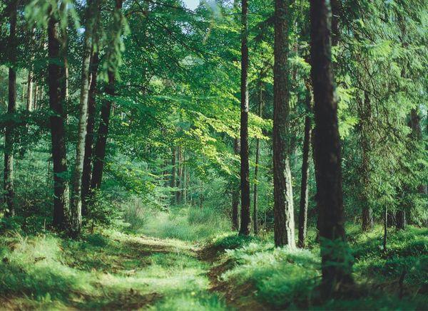 Paintner Forst im Altmühltal