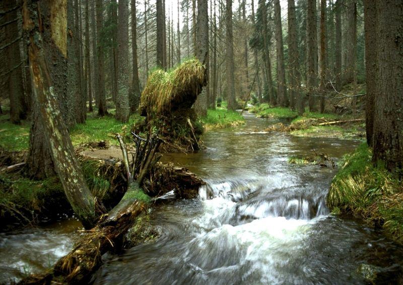Wildwachsende Flusslandschaft am Reschbach bei Mauth