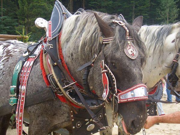 Prächtig geschmückte Pferde kann man beim Heimatfest in Mauth bewundern