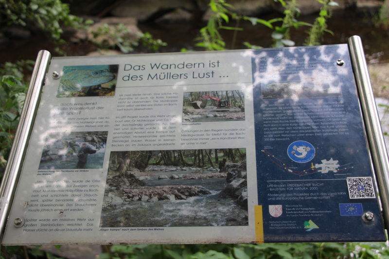Infotafel 2 am Gewässerpfad Orke