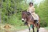 Muli mit Reiter