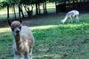 Die Alpakas stehen zum Kuscheln oder für entspannte Wanderungen bereit