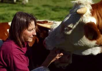 Auge in Auge mit Kühen