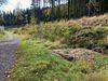 Der Hohlweg mit der Karrenspur in der Nähe der Listerquelle