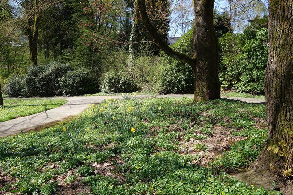 Der Frühling bringt die eine oder andere Blütenpracht hervor