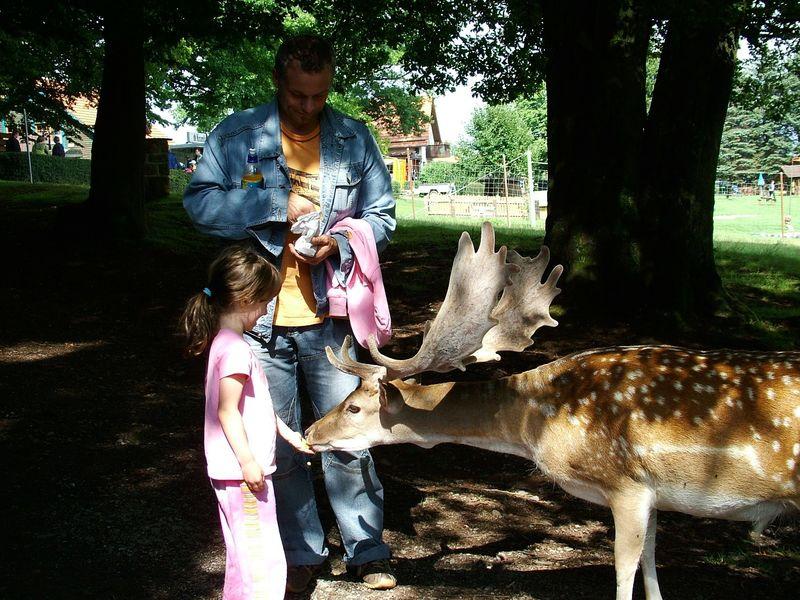 Freilaufende Wildtiere füttern im Bergwildpark Meißner im Geo-Naturpark Frau-Holle-Land