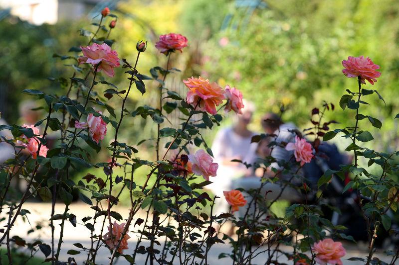 Botanischer Garten Saarland