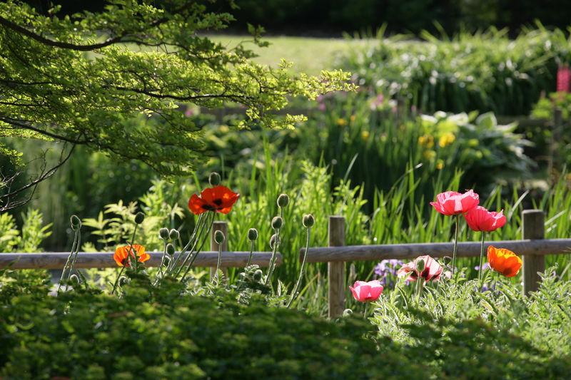 Botanischer garten g rten ohne grenzen - Front de liberation des nains de jardin ...