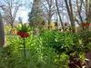 Blumen im Gutspark Möglin, Foto: Fördergesellschaft Albrecht Daniel Thaer