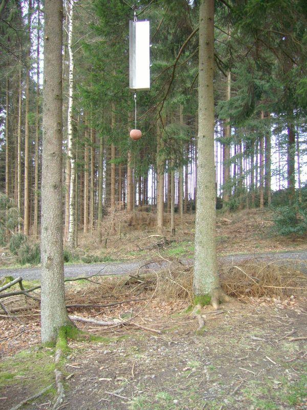 Klangwald Möhnesee