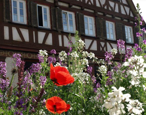 Fachwerkhaus mit Blumen in Mössingen
