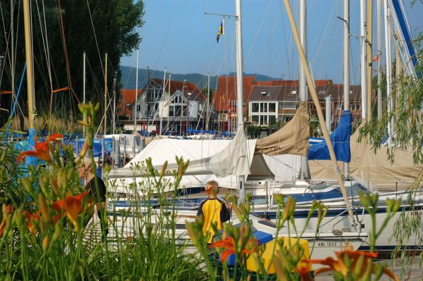 Hafen Moos