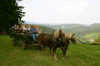 Die Pferdekutschenfahrten werden von Wilhelm Klausmann angeboten